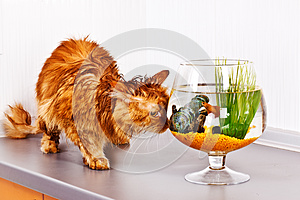 Cat And Fish Royalty Free Stock Photos - Image: 25910458