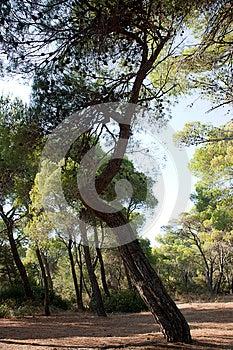 Tree Stock Image - Image: 25942171