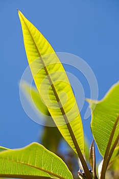 Leaves Royalty Free Stock Photography - Image: 25949797