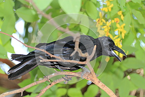 Raven Royalty Free Stock Images - Image: 25950319