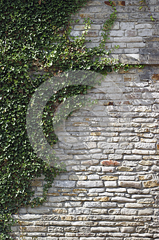 Overgrown Wall Stock Photography - Image: 25961862