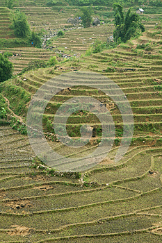 Green Rice Terraces Stock Images - Image: 25968714