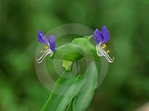 Wild Flowers Free Stock Photo