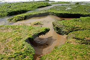 Reef Roof Stock Images