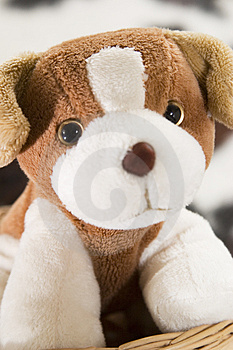 Puppy Toy Free Stock Photo