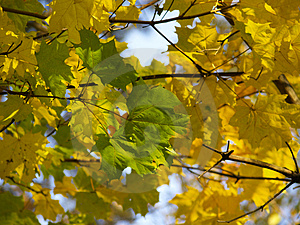 Autumn [16] Free Stock Photos