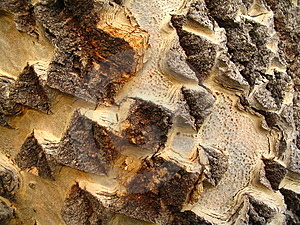 Tree Trunk Macro Free Stock Photos