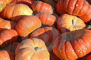 Lots Of Pumpkins Free Stock Photos