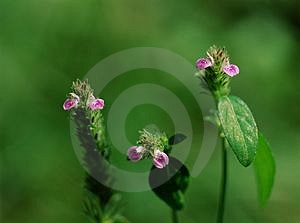 Wild Flowers Stock Photos