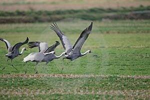 Birds Free Stock Image