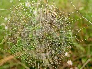 Misty Web Free Stock Photography
