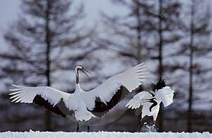 Birds Free Stock Photos