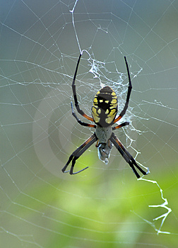 Colorful Spider Free Stock Photos