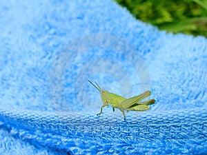Grasshopper 1 Stock Images