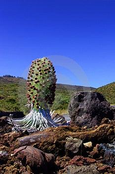 Hawaiin Plant Stock Photography