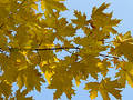 Autumn [12] Stock Images
