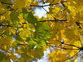 Autumn [16] Royalty Free Stock Photos