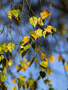 Autumn [21] Royalty Free Stock Images