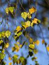 Autumn [21]