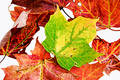 Leaves isolated Stock Photo