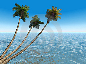Palms On An Exotic Tropical Be Stock Photos - Image: 2609623