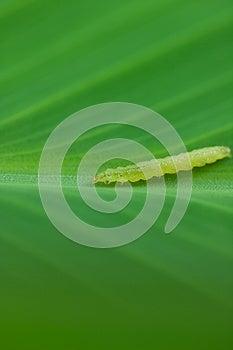 Worm Larvae  Stock Photography - Image: 26009532