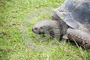 Tortoise On Grass Stock Image - Image: 26031171
