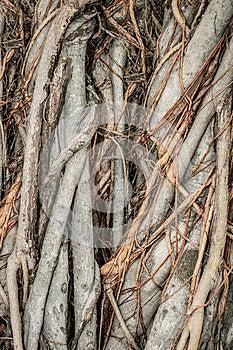 Close-up Of Parasite Tree Royalty Free Stock Photos - Image: 26050338