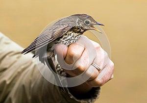 Screaming Bird Stock Image - Image: 26074761