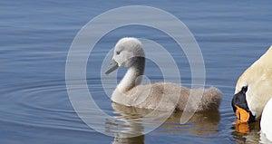 Swimming Lesson Stock Image - Image: 26086641