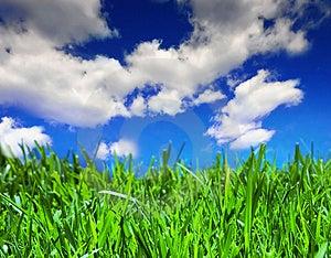 Brillante esmeralda hierba con hermosas nublado cielo de verano.