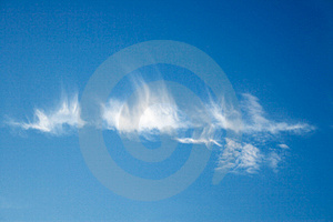 Sky feathers Stock Image