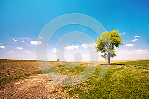 Alone Tree Stock Photo - Image: 26101760