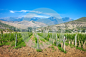 A Valley Of Vineyards Royalty Free Stock Image - Image: 26101836