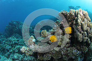 Fish On Tropical Coral Reef Royalty Free Stock Images - Image: 26104519