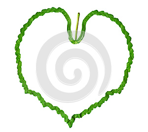Frame Of The Green Leaf Royalty Free Stock Image - Image: 26116846
