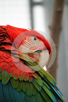 Parrot Royalty Free Stock Photography - Image: 26120717
