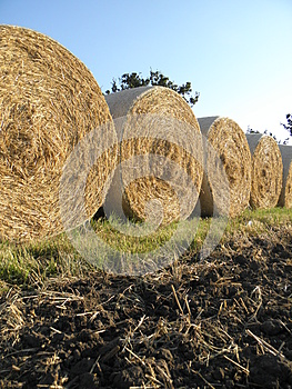 Cereals Harvest Royalty Free Stock Photos - Image: 26161298
