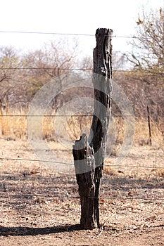 Bushveld Tree Trunk Fence Stock Photos - Image: 26165523