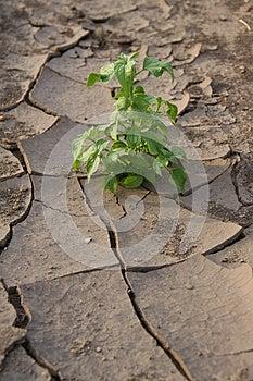 Life After A Drought Stock Photos - Image: 26188213