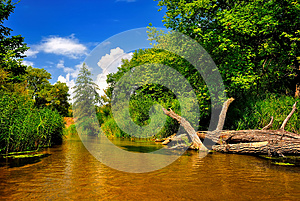 River In Forest On A Sunny Day Stock Photo - Image: 26198490