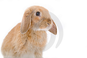 Brown-white bunny on the left Stock Photos