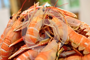 Plate Of Crayfish Royalty Free Stock Photo - Image: 26211875
