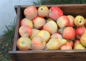 Harvest Of Ripe Apples And Pears Stock Photo - Image: 26275190