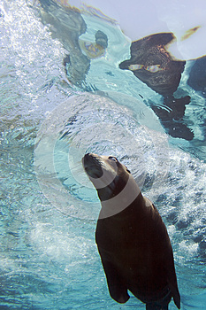 Sea Lion Stock Image - Image: 26299751
