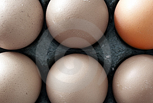 Six Chicken Eggs Stock Images - Image: 2638604