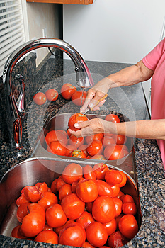 Coring Tomatoes. Royalty Free Stock Photography - Image: 26310227