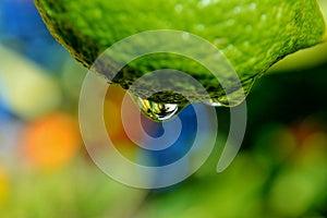 Raindrop On Lemon Stock Photo - Image: 26311100