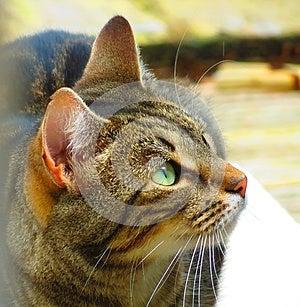 Кот Стоковое Фото - изображение: 26324690