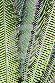 Primitive Leaves Stock Images - Image: 26349814